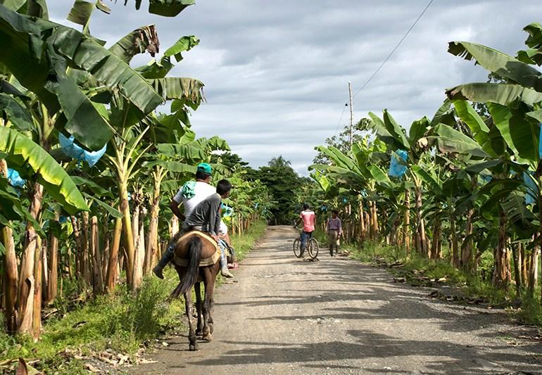 Asesinan líder de restitución de tierras en Curvaradó