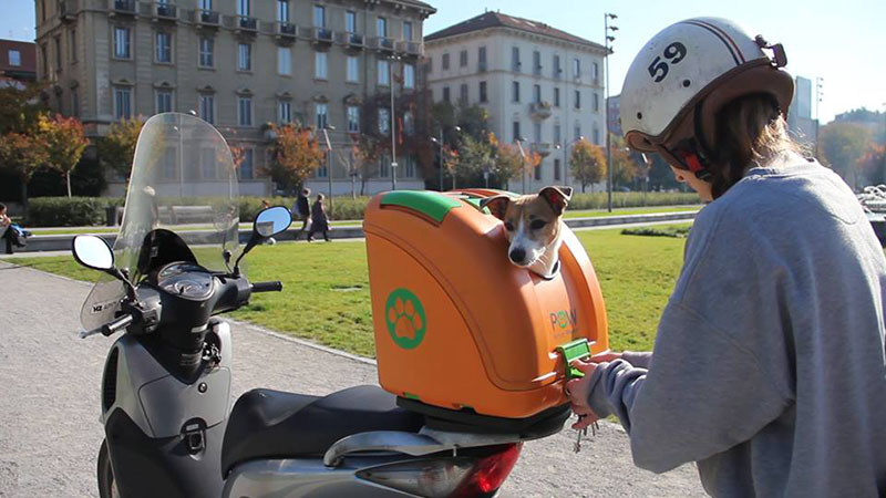 This hardshell pet carrier has been designed to transport pets on scooters  CONTEMPORIST