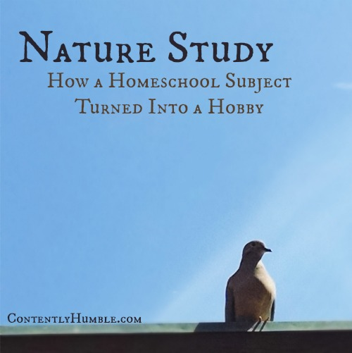Nature Study: How a Homeschool Subject Turned Into a Hobby
