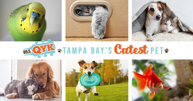 Tampa Bay Cutest Pet Contest