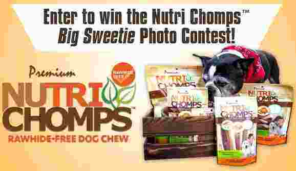BOB & TOM Show Nutri Chomps Dog Photo Contest