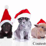 KOIT Santa Paws Pet Photo Contest (koit.com)