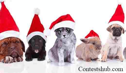 KOIT Santa Paws Pet Photo Contest