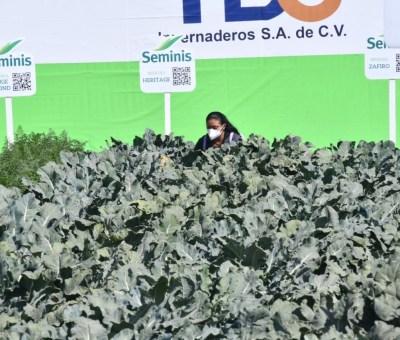 Presentan XXVI edición de expo agroalimentaria