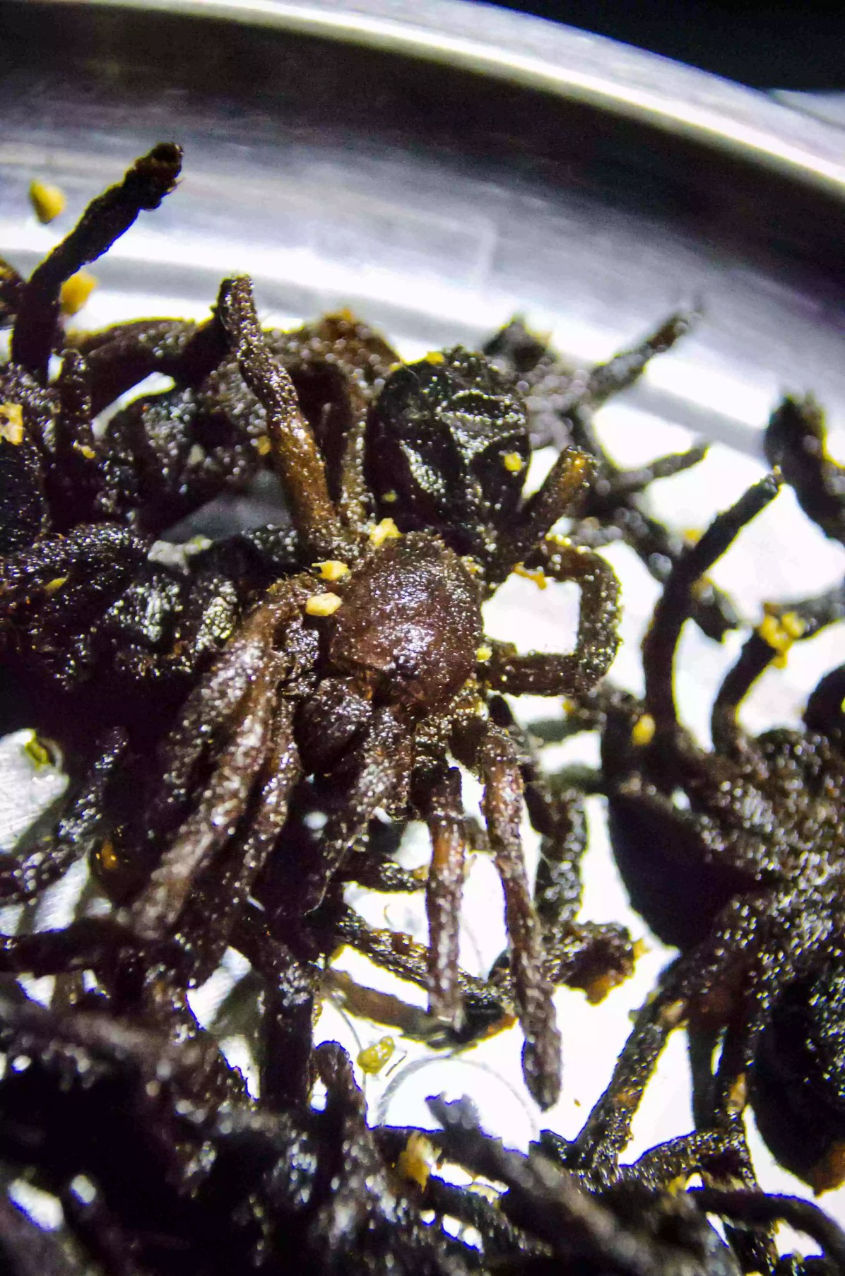 Eating Insects: Just close your eyes, it'll be over soon