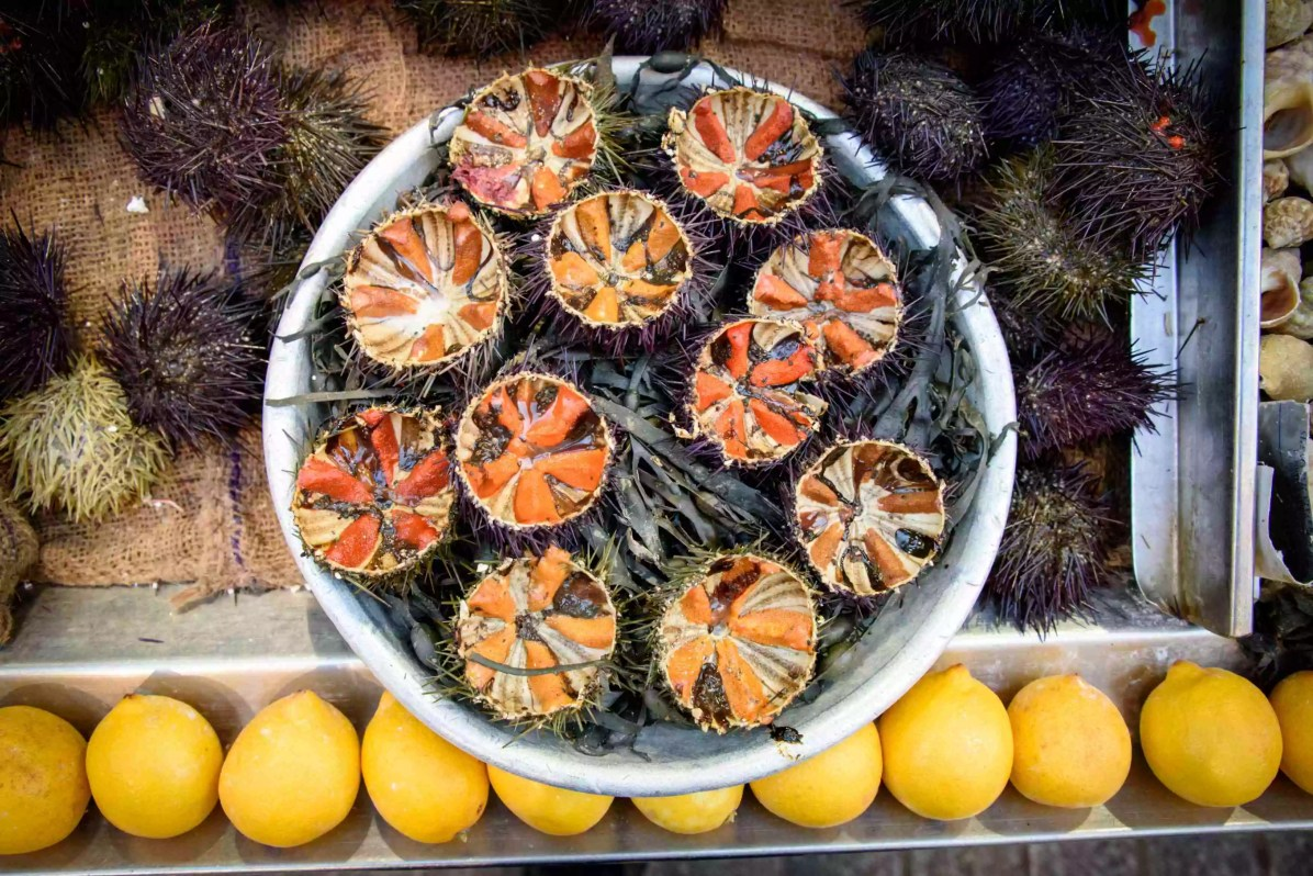 """""""Oh, yes! You don't like sea urchin! I forgot!"""""""