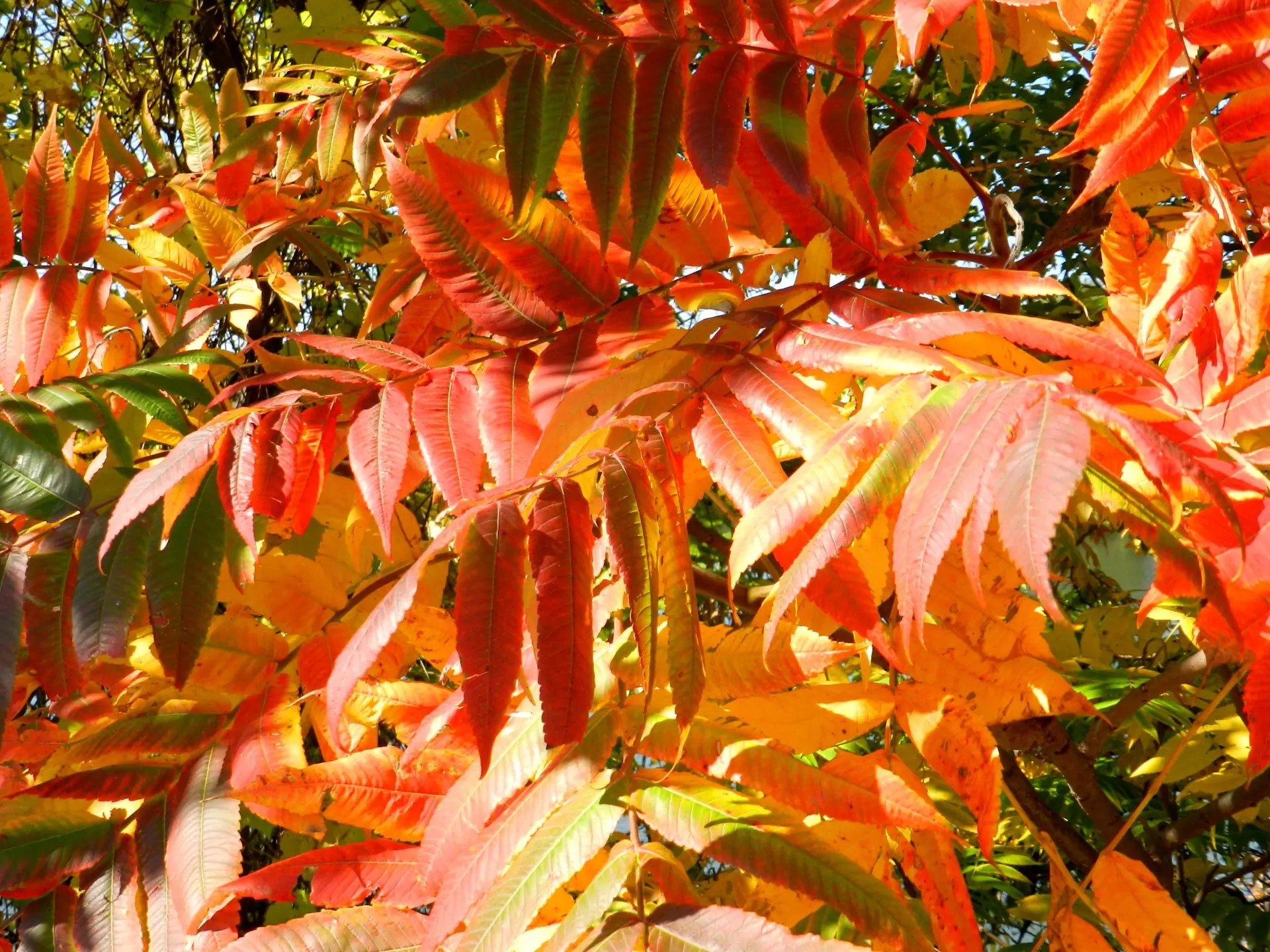 Voyage Québec : couleurs de l'automne
