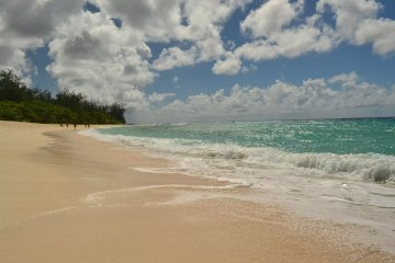 A beach in the Barbados - This is a copyright-free image
