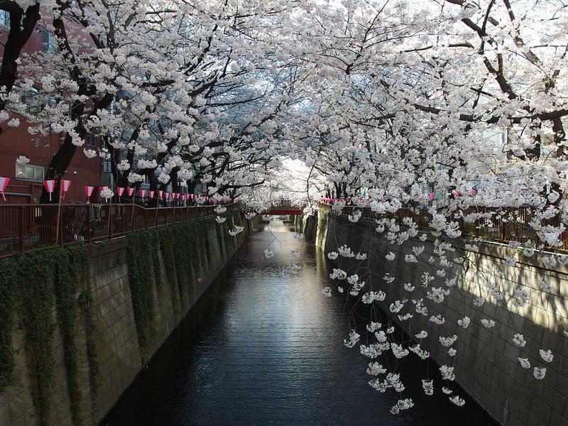 Meguro River Cherry Blossom Festival - photo by Guilhem Vellut under CC BY 2.0