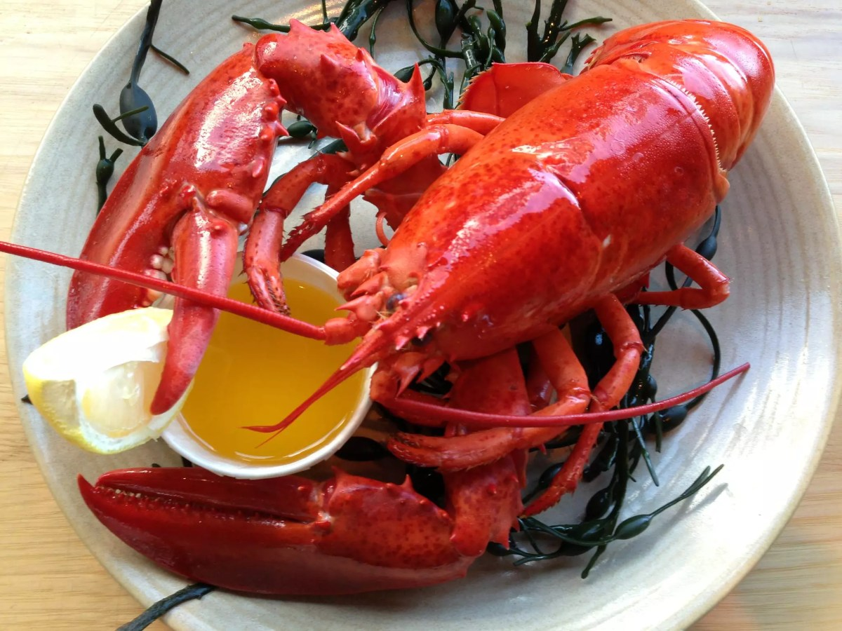 No Reservations Las Vegas - Steamed Lobster, credit Legal Seafoods - photo by Massachusetts Office Of Travel & Tourism under CC BY-ND 2.0