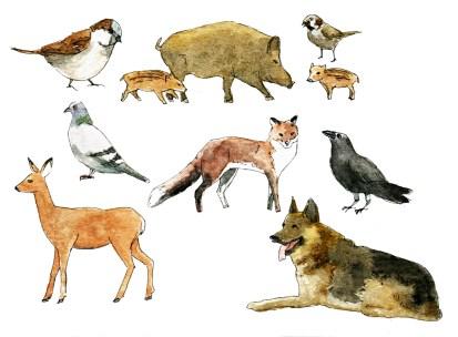 Illustrationen Tiere für Cover vom Geschäftsbericht und Magazin 2014 der GASAG