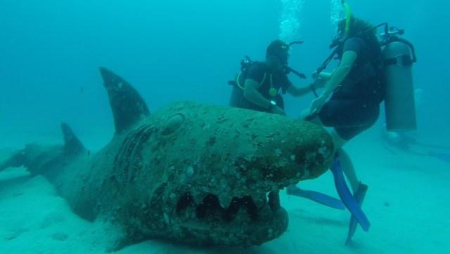 Tubarão que encontramos no meio do caminho...