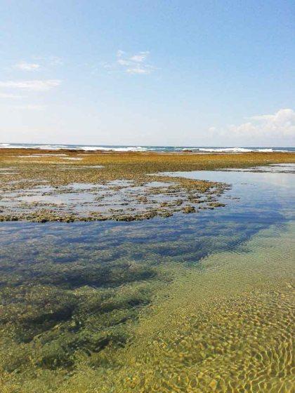 Corais, em Taipu de Fora