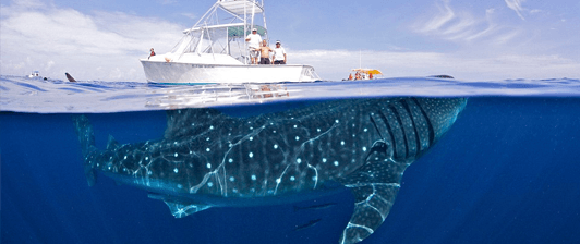 Mexico's Top Nature Experience Whale Shark