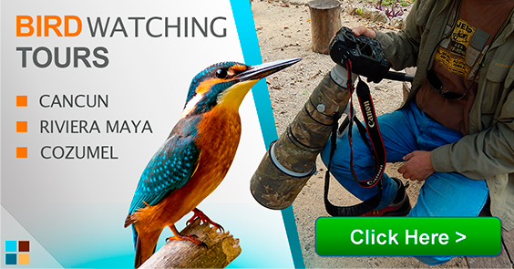 Top bird watching places at The Riviera Maya and Cancun tours contoyexcursions