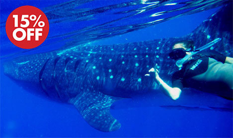 whale shark tour cancun 2018