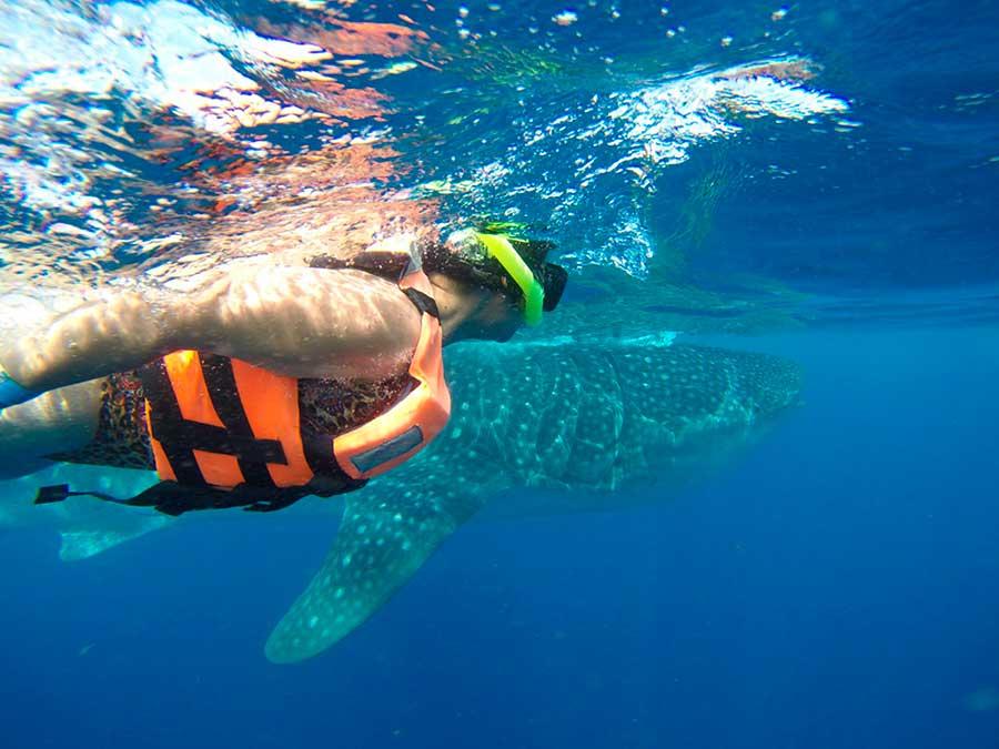 whale-shark-snorkel-tour-contoyexcursions