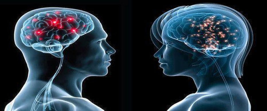 https://i0.wp.com/www.contrainfo.com/wp-content/uploads/2014/10/cerebro_masculino_y_femenino.jpg