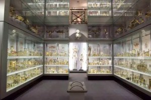 Crystal Gallery, Hunterian Museum