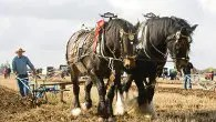 Reigning British Champion Horse Ploughman Jim Elliott from Beamish, Co Durham