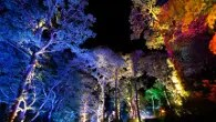 Magical autumnal experience with The Enchanted Forest