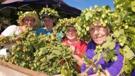 Hop picking and rare ale at the Hops 'n' Harvest Beer Festival