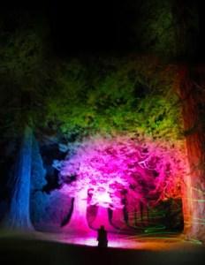 Benmore Botanic Garden - Glowing Giants