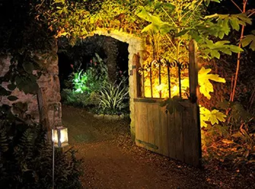 Enchanted Floodlit Garden - Abbotsbury Subtropical Garden