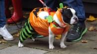Halloween dog walk in Hampstead