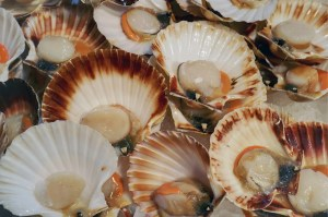 Rye Bay Scallop Week 2015 - Photo: Clive Sawyer
