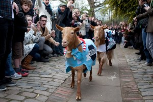 Oxford & Cambridge Goat Race (Photo: Tyson Benson)