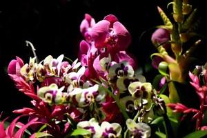 Kew Orchid Lates 2017 - Jeff Eden, RBG Kew