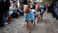 Oxford & Cambridge Goat Race 2017 - Photo Tyson Benson
