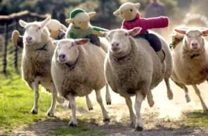 Sheep Racing 2017 - The BIG Sheep - Devon - Mark Passmore