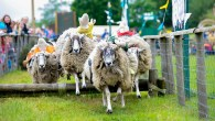 Flock to the sheep races at Willows Activity Farm