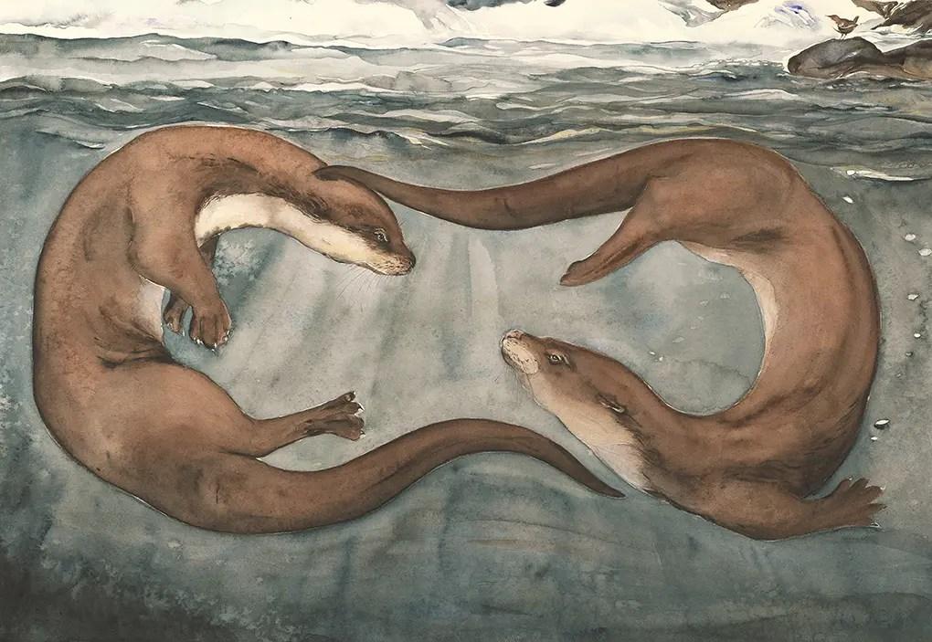 Otter © Jackie Morris