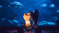 Dine at the Aquarium after-hours