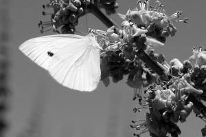 Blanco y negro - Jotaeme - Dig - 5