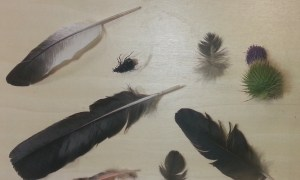 A selection of feathers