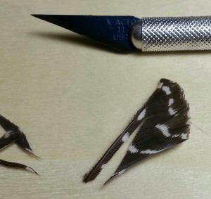 Pic 12 Feathers