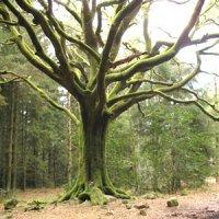 arbre qui cache la forêt