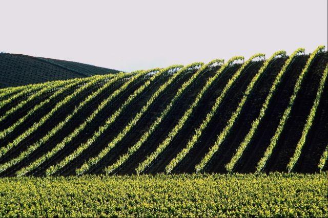 Agriculture (Crédits : Rex Turgano, licence CC-BY-NC-SA 2.0), via Flickr.