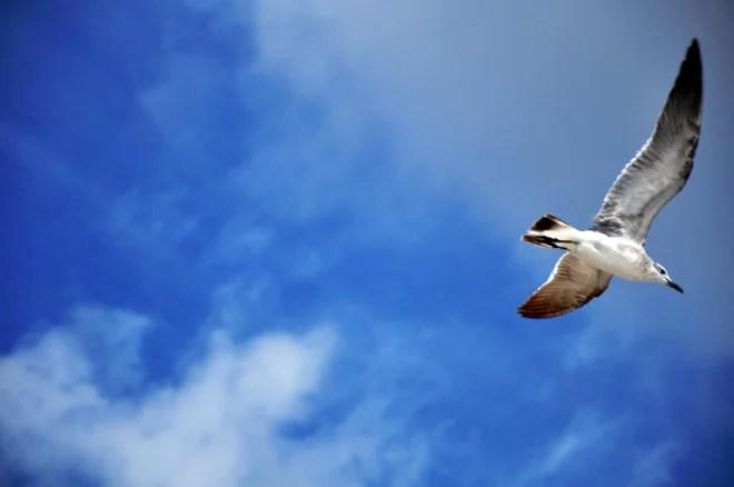 Liberté (Crédits Scarleth Marie, licence Creative Commons)