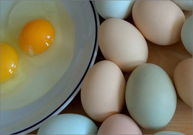 All eggs are created equals credits NYcandre (CC BY-NC-ND 2.0)