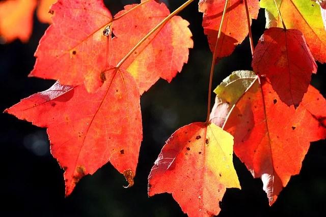 Feuilles d'automne (Crédits : Liz West, licence CC-BY 2.0), via Flickr.