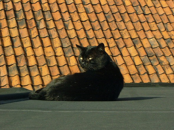 Peter Huys-Black cat(CC BY-SA 2.0)