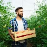Contributi a fondo perduto fino a 50.000 euro per giovani imprenditori agricoli Regione Emilia Romagna