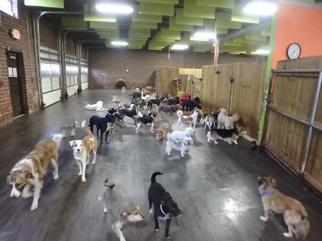 Soundproof Dog Kennel  Soundproofing Indoor  Outside Dog