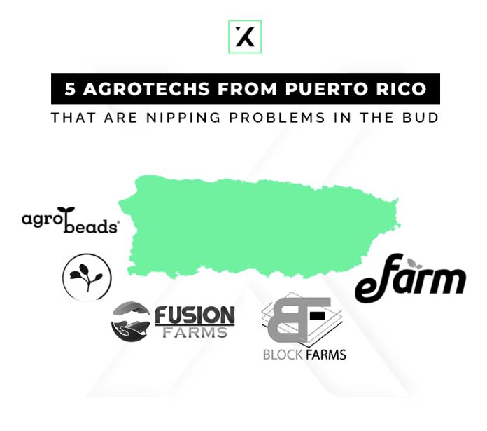 5 agrotechs puertorriqueñas arrancando problemas de raíz