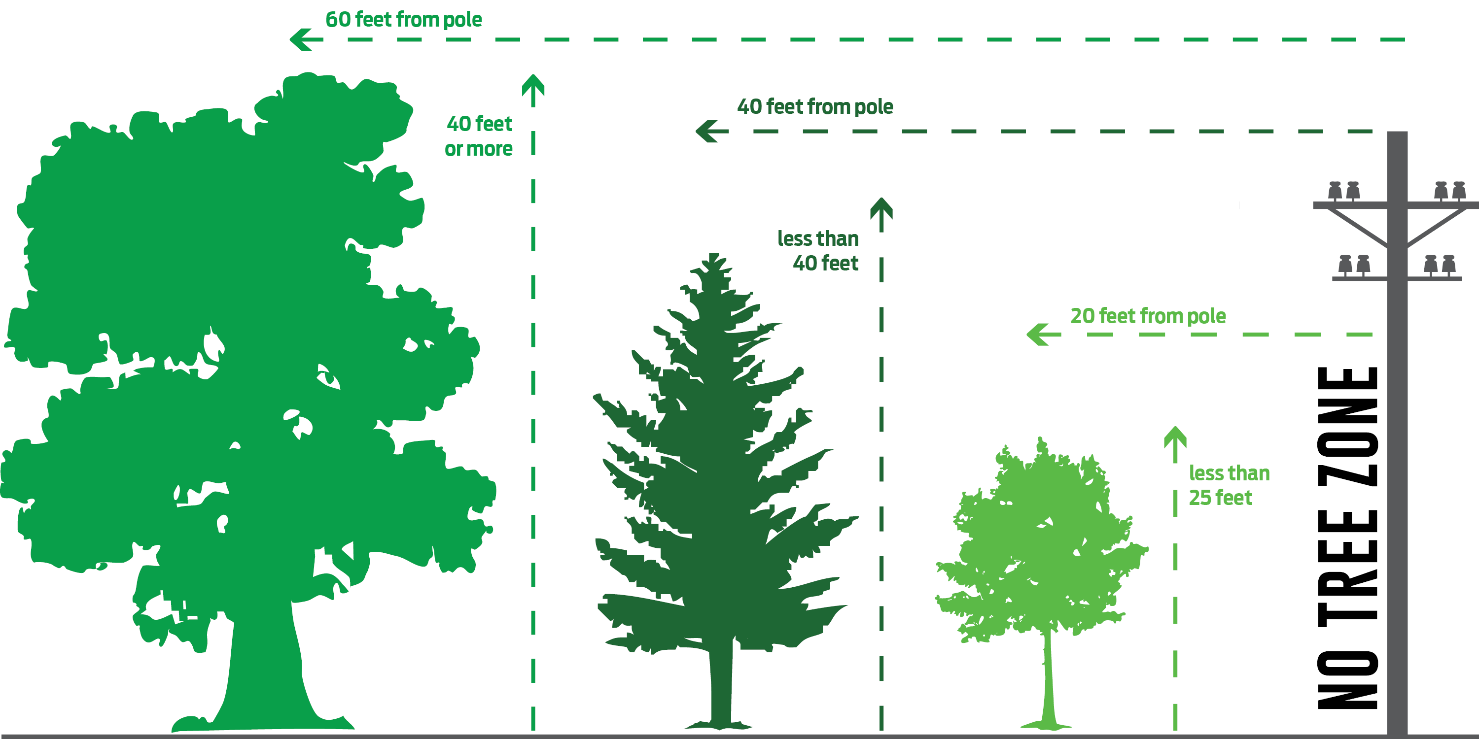 Planting Amp Trimming Trees Near Power Lines